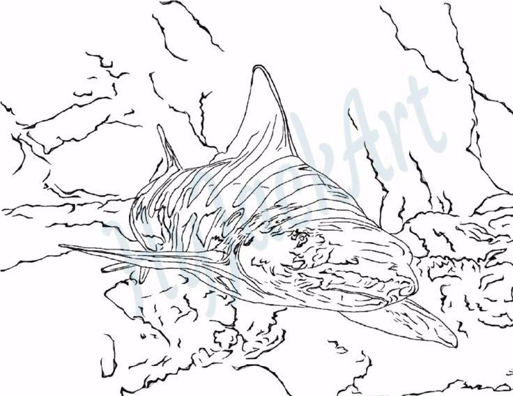 Leopard Shark coloring #11, Download drawings