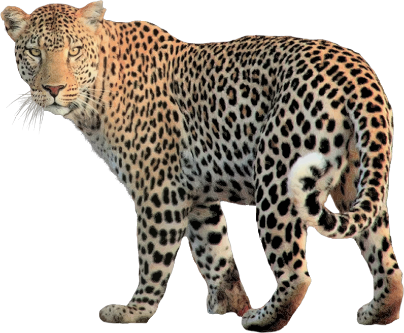 Leopard svg #4, Download drawings