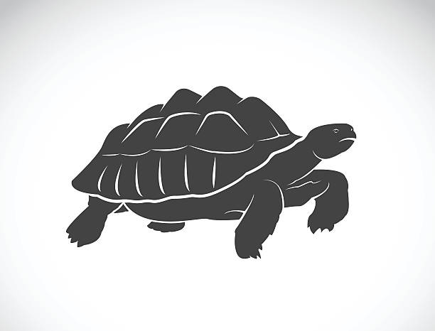 Leopard Tortoise clipart #14, Download drawings
