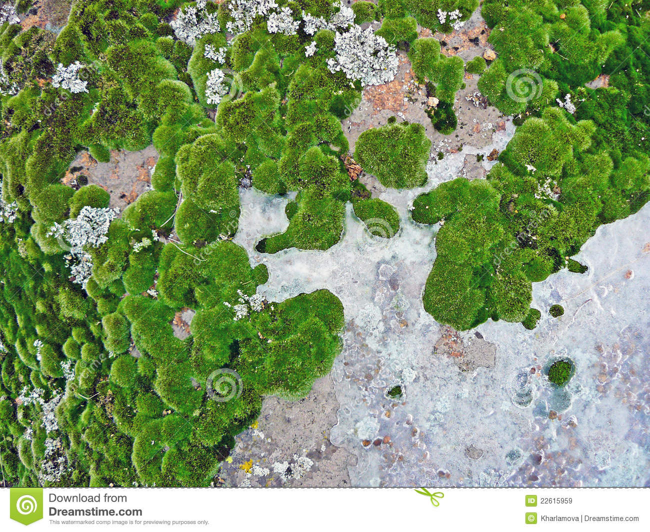 Lichens clipart #2, Download drawings