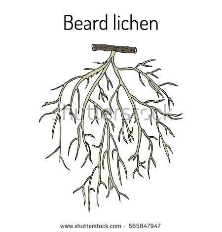 Lichens coloring #6, Download drawings