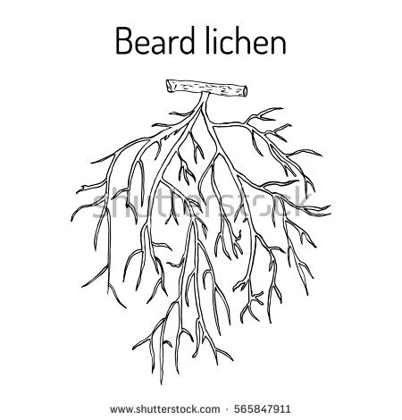 Lichens coloring #10, Download drawings