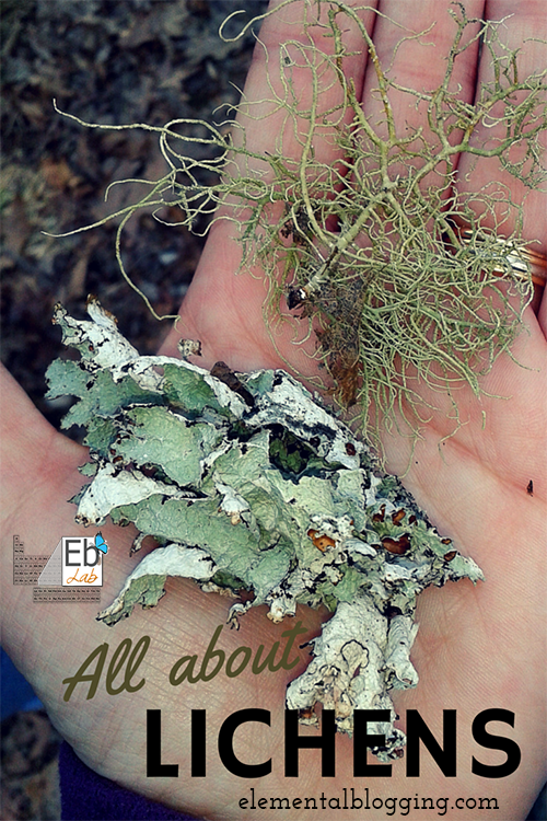 Lichens coloring #4, Download drawings