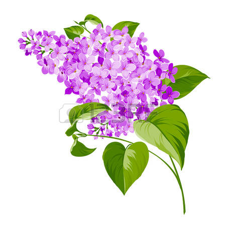 Lilac clipart #8, Download drawings
