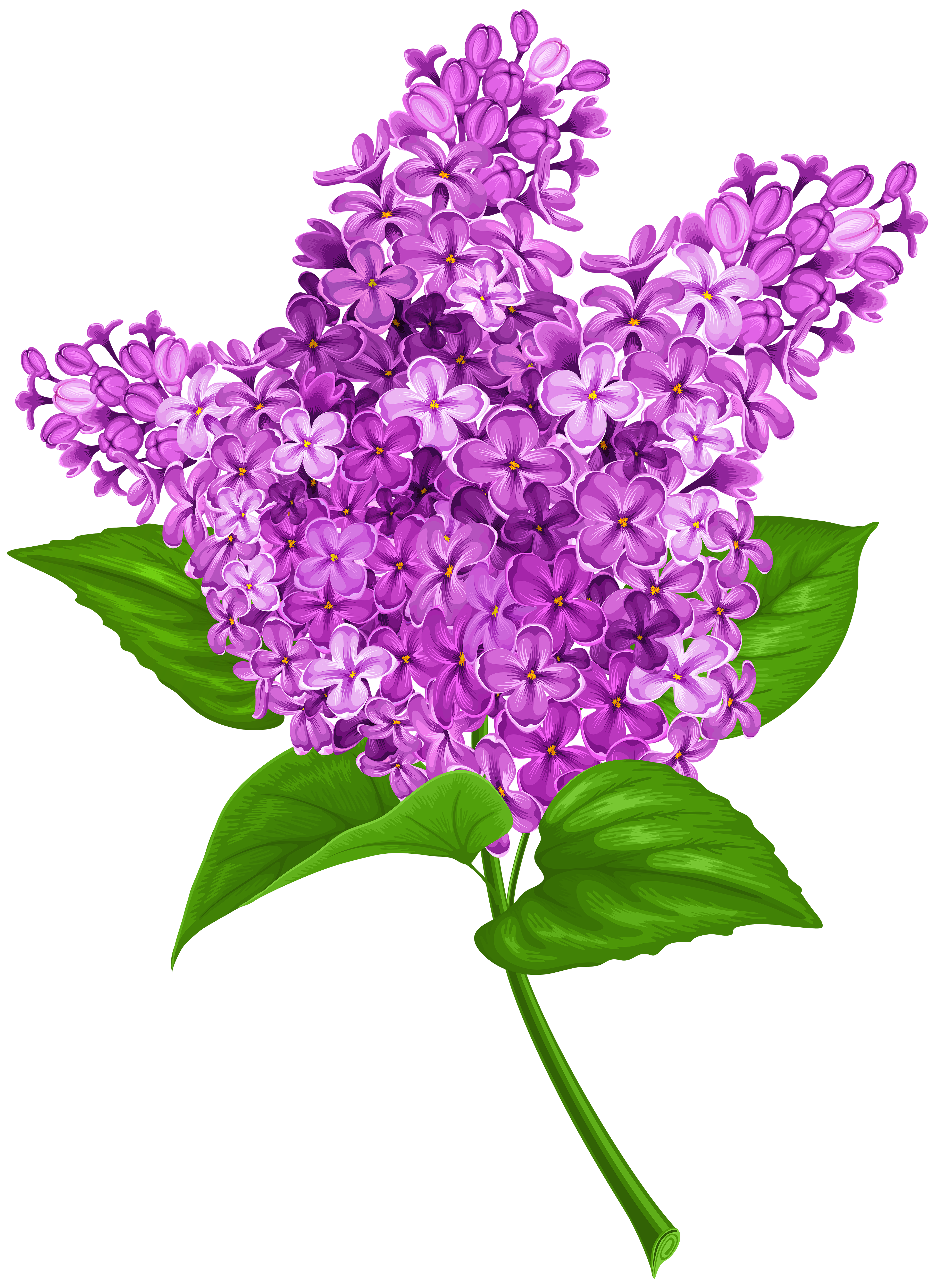 Lilac clipart #1, Download drawings