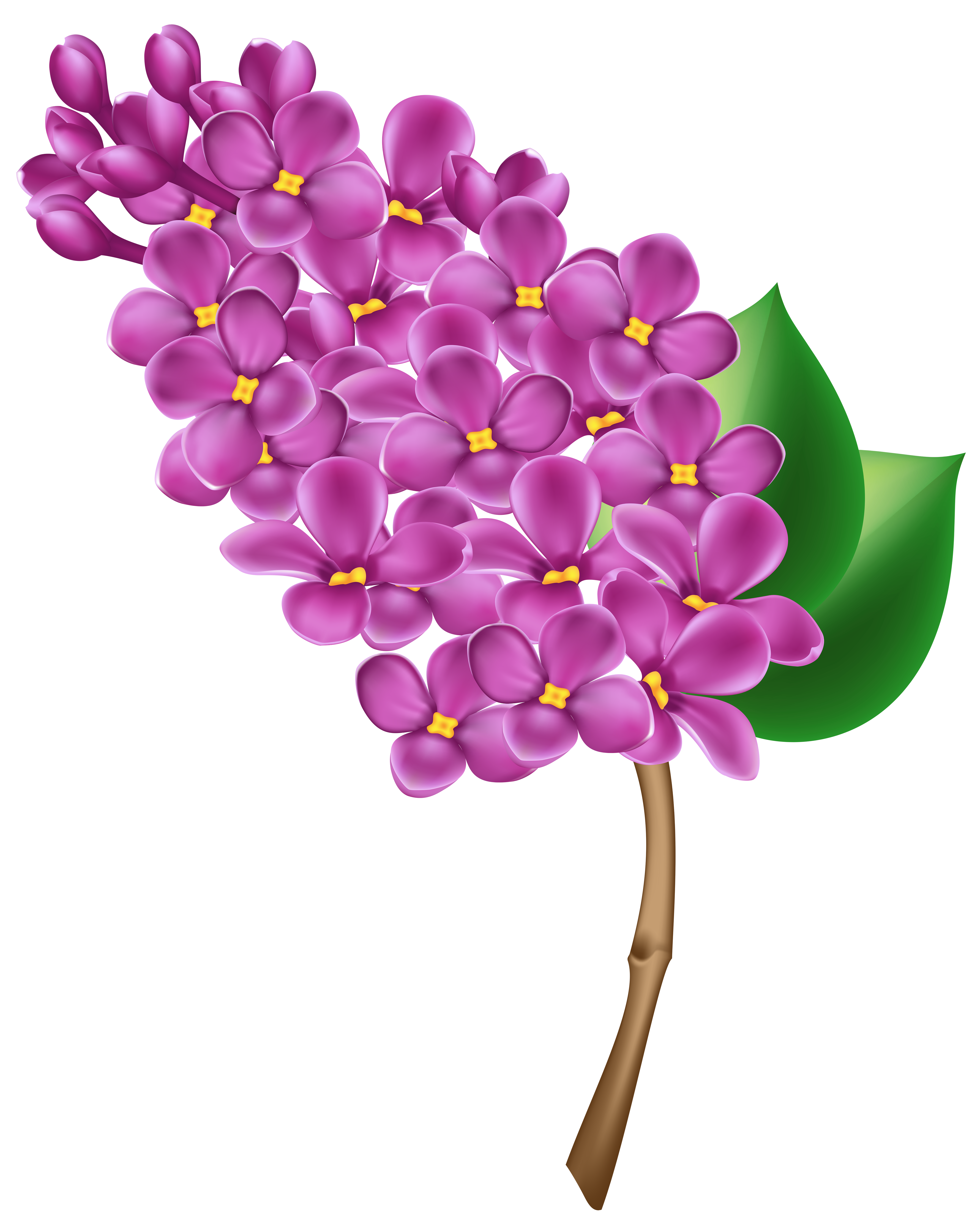 Lilac clipart #2, Download drawings