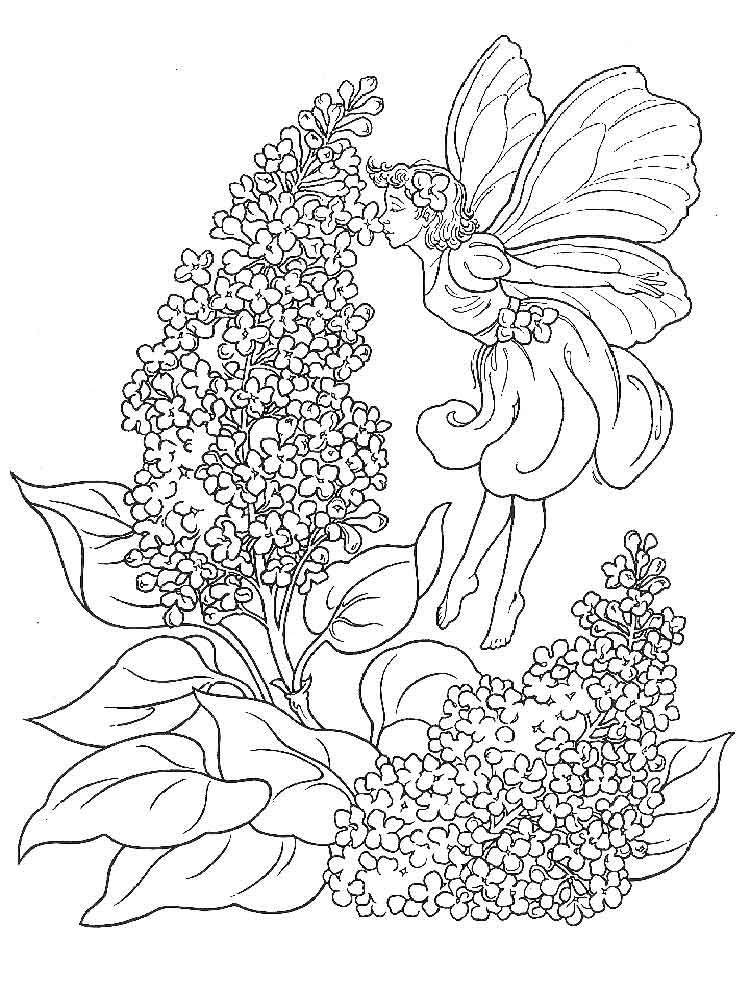 Lilac coloring #14, Download drawings