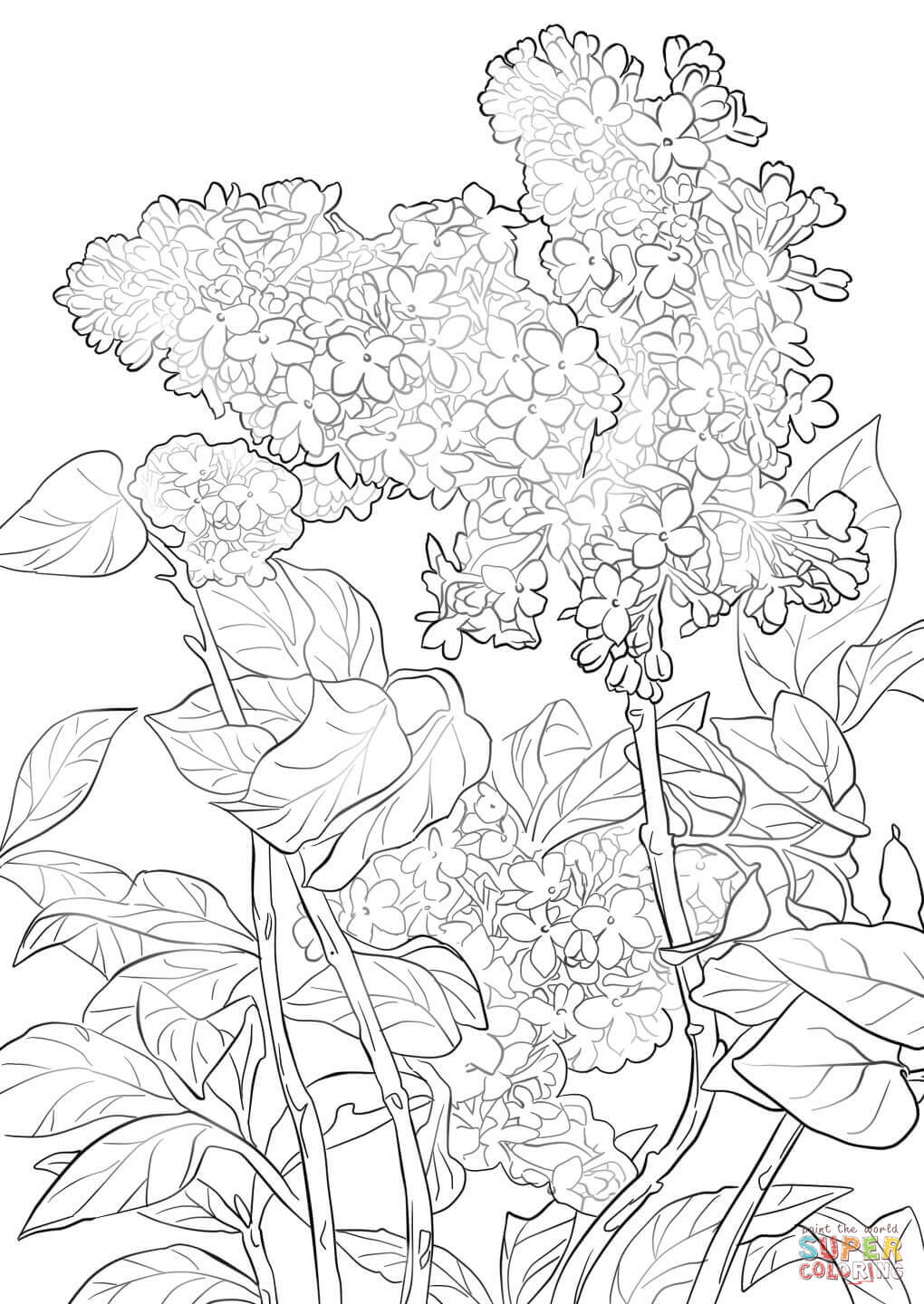 Lilac coloring #4, Download drawings