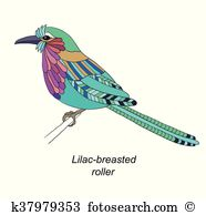 Lilac-breasted Roller clipart #17, Download drawings