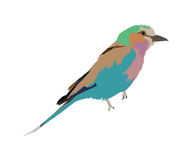Lilac-breasted Roller clipart #7, Download drawings