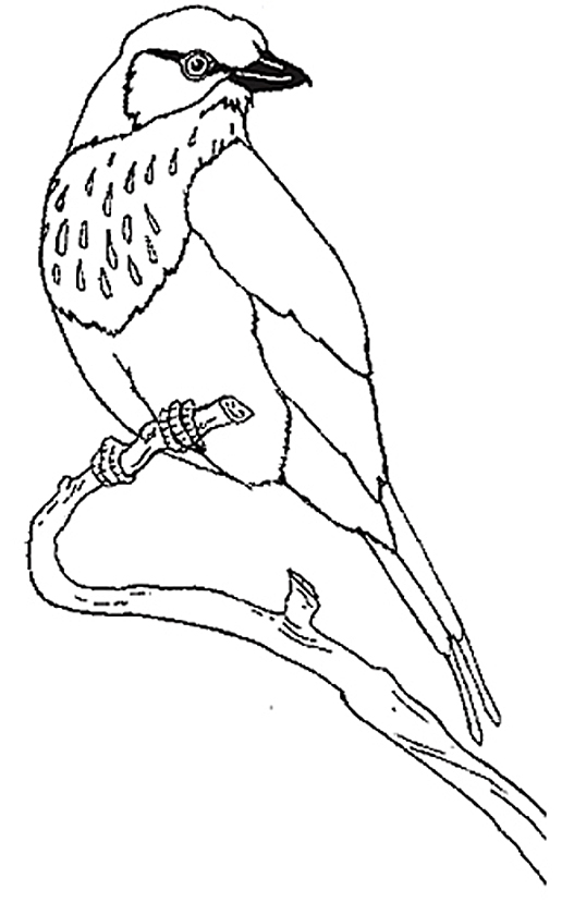 Lilac-breasted Roller clipart #16, Download drawings