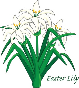 Lily clipart #12, Download drawings