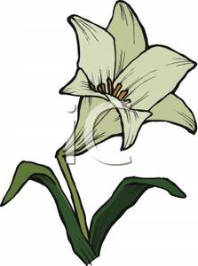 Lily clipart #11, Download drawings