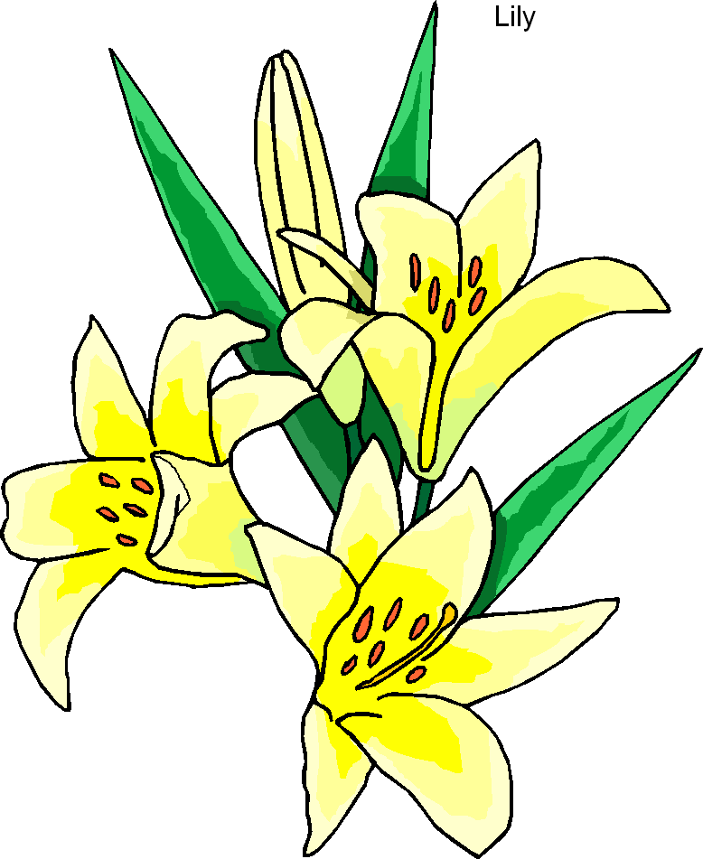 Lily clipart #14, Download drawings