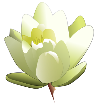 Lily clipart #16, Download drawings