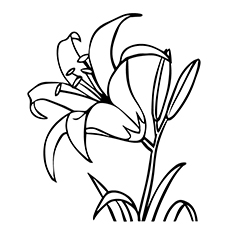 White Rain Lily coloring #5, Download drawings