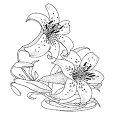 princess tiger lily coloring pages - photo#17