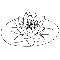 White Rain Lily coloring #4, Download drawings