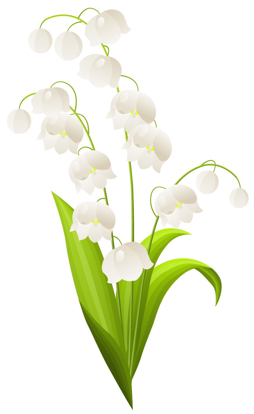 Lily Of The Valley clipart #3, Download drawings