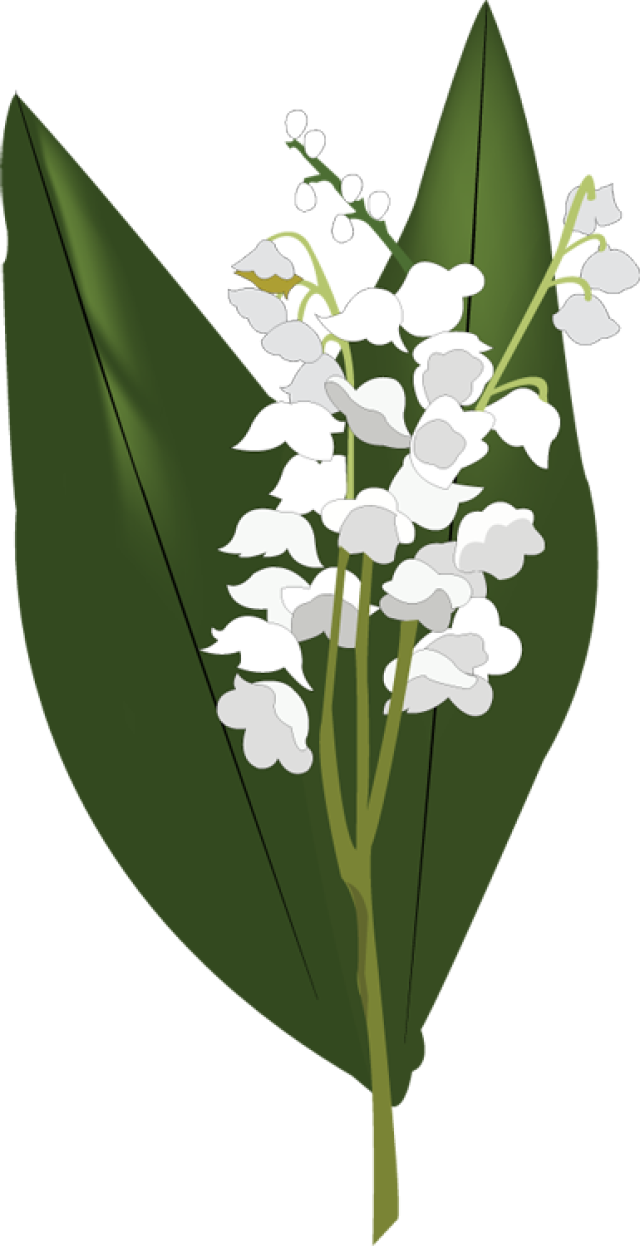 Lily Of The Valley clipart #13, Download drawings