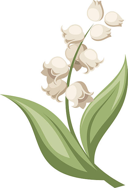 Lily Of The Valley clipart #8, Download drawings