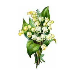 Lily Of The Valley clipart #7, Download drawings