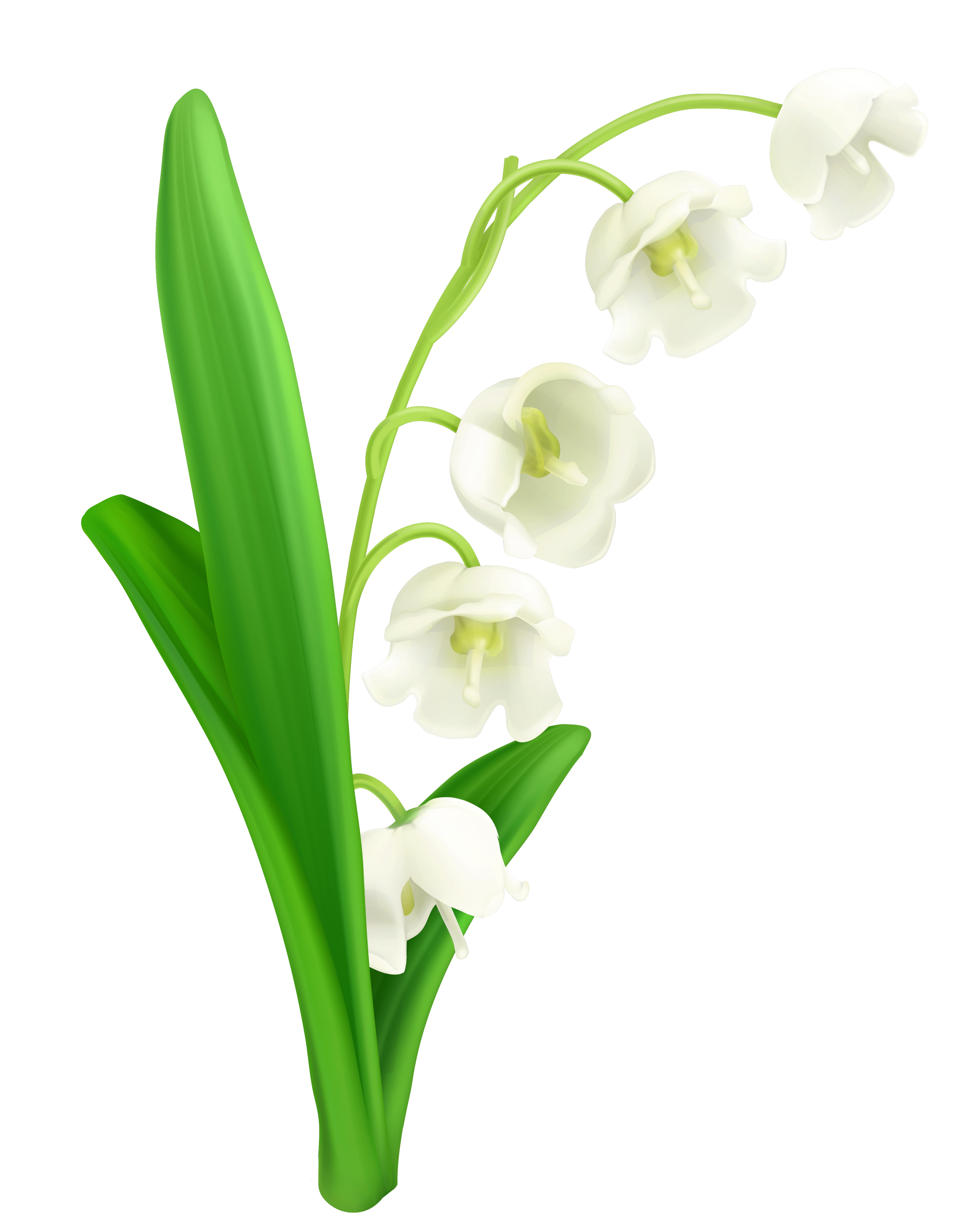 Lily Of The Valley clipart #2, Download drawings