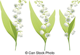 Lily Of The Valley clipart #16, Download drawings