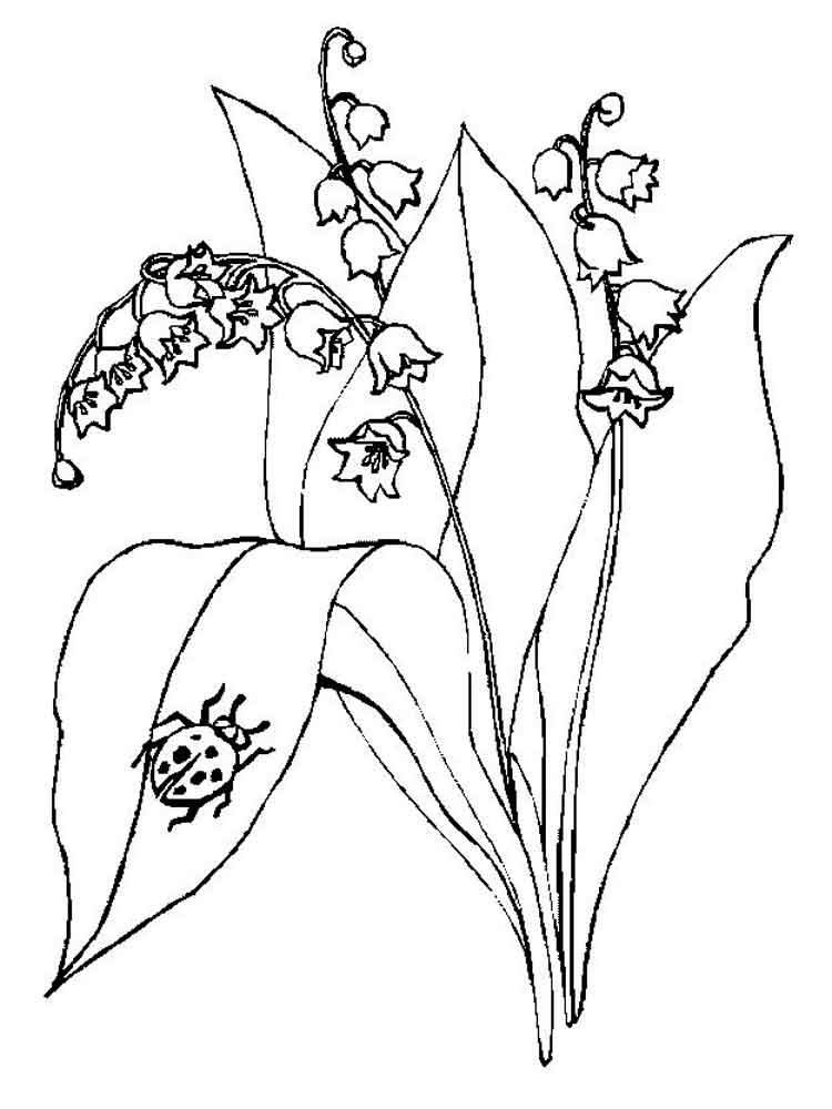 Lily Of The Valley coloring Download Lily Of The Valley