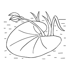 White Rain Lily coloring #2, Download drawings
