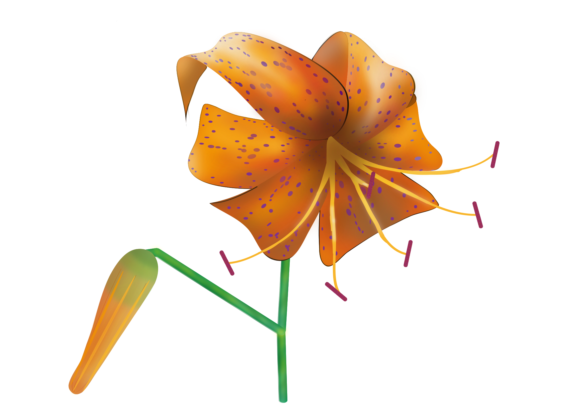Lily svg #8, Download drawings