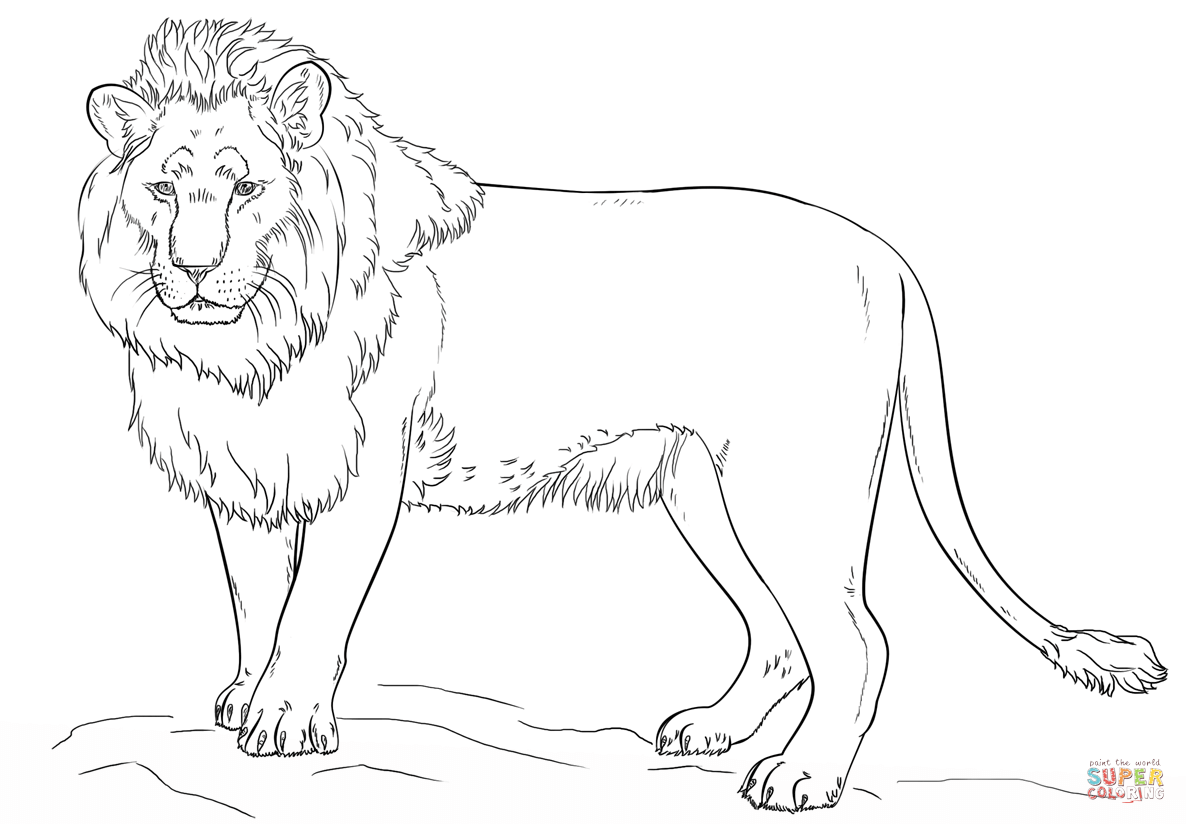 Lion coloring #5, Download drawings