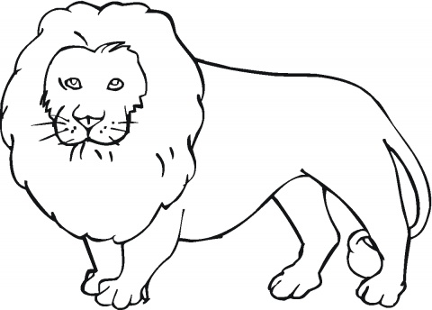 Lion coloring #4, Download drawings