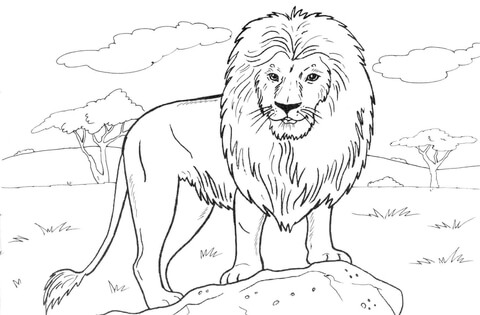 Lion coloring #13, Download drawings