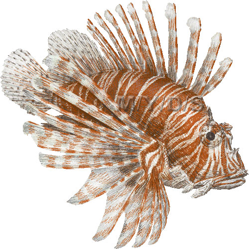 Lionfish clipart #17, Download drawings