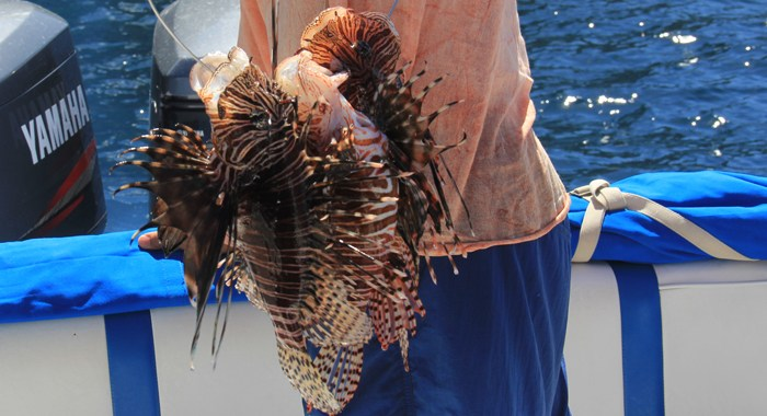 Lionfish svg #7, Download drawings