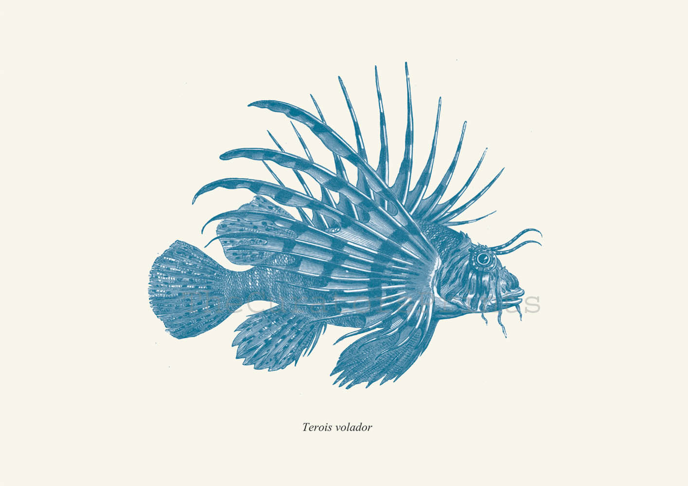 Lionfish svg #19, Download drawings