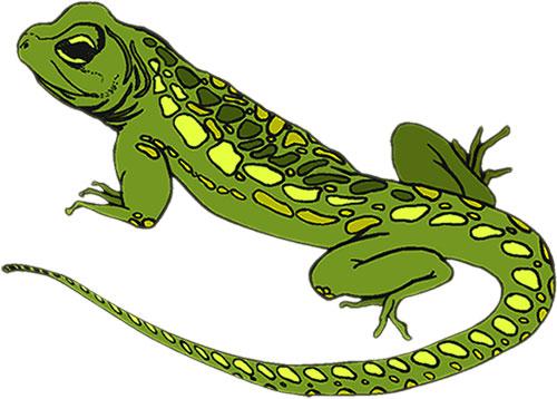 Lizard clipart #12, Download drawings
