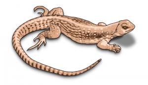 Lizard clipart #8, Download drawings