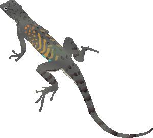 Lizard clipart #11, Download drawings