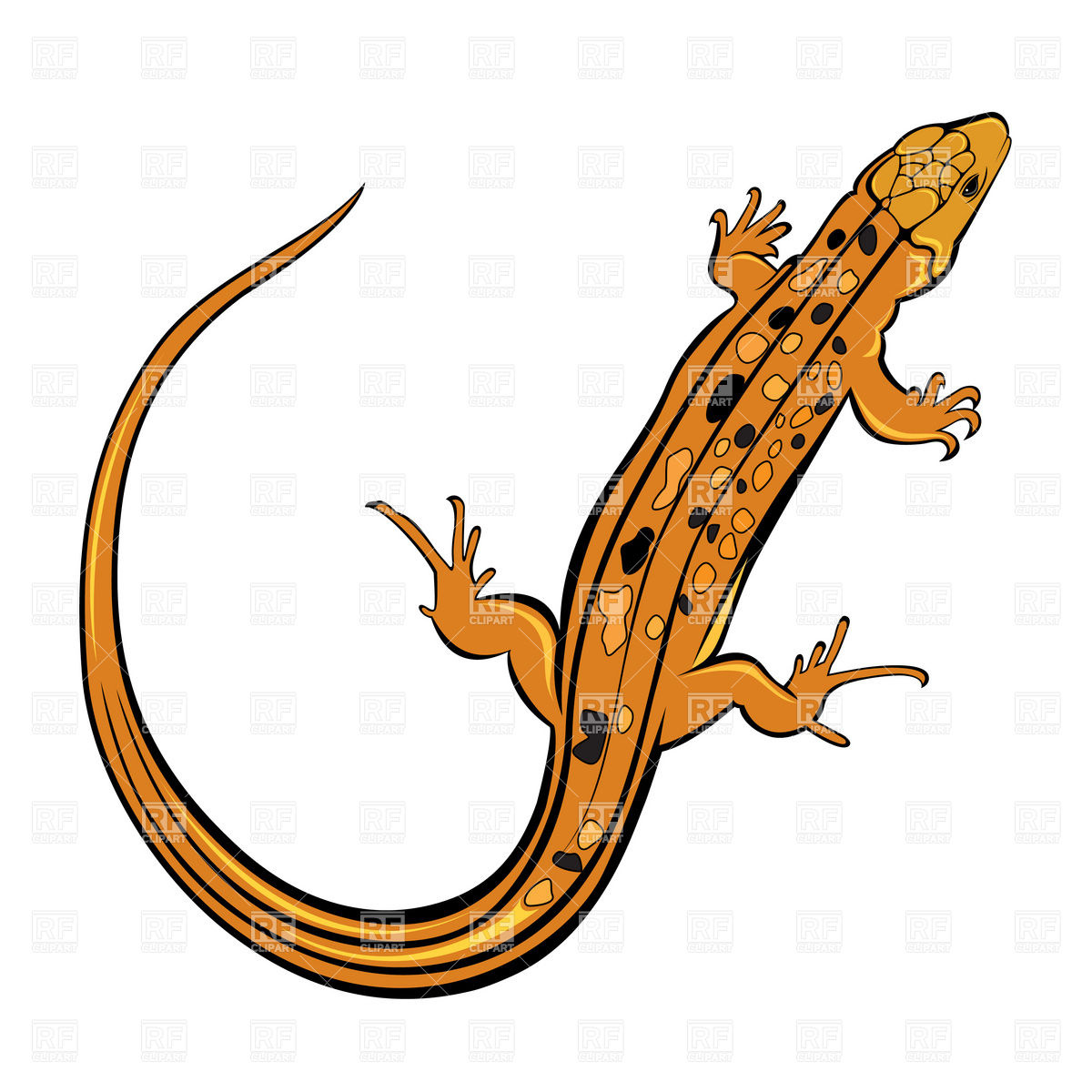 Lizard clipart #1, Download drawings