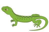 Lizard clipart #18, Download drawings