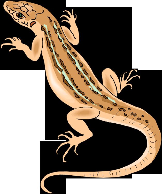 Lizard clipart #7, Download drawings