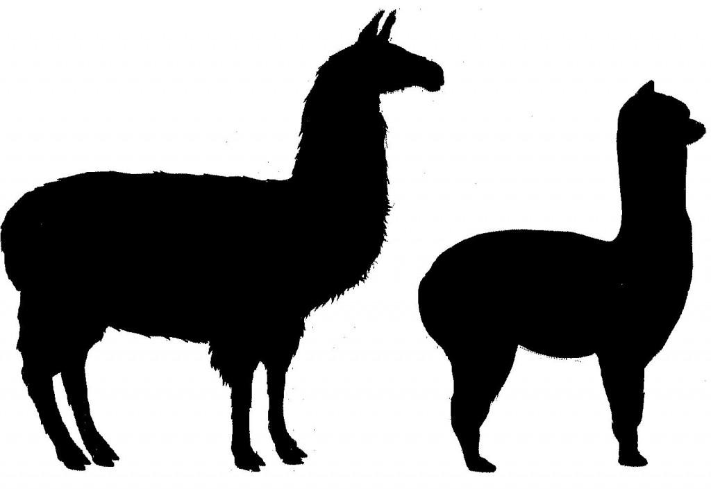 Llama clipart #3, Download drawings