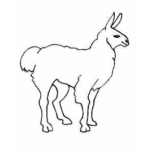 Llama coloring #9, Download drawings