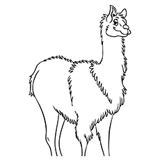 Llama coloring #5, Download drawings