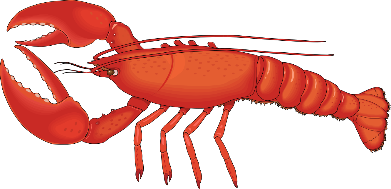 Lobster clipart #15, Download drawings