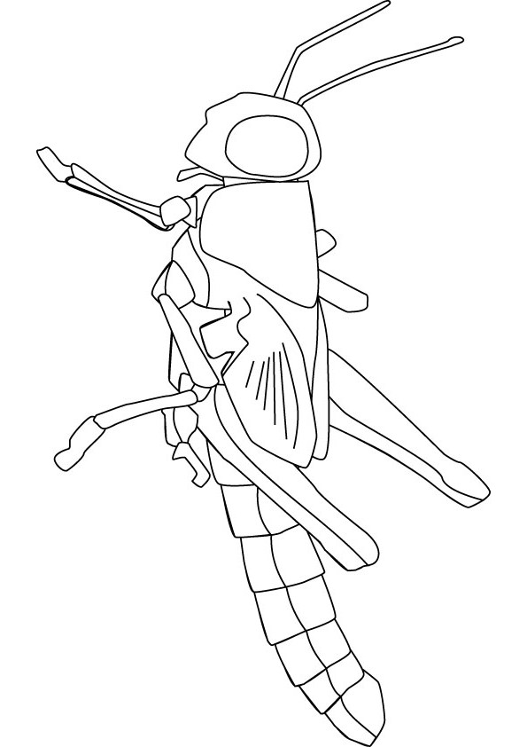 Locust coloring download locust coloring for Locust coloring page