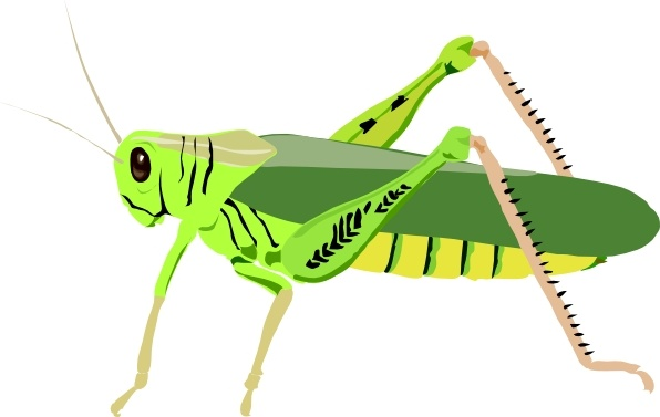 Locust svg #20, Download drawings