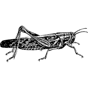 Locust svg #15, Download drawings